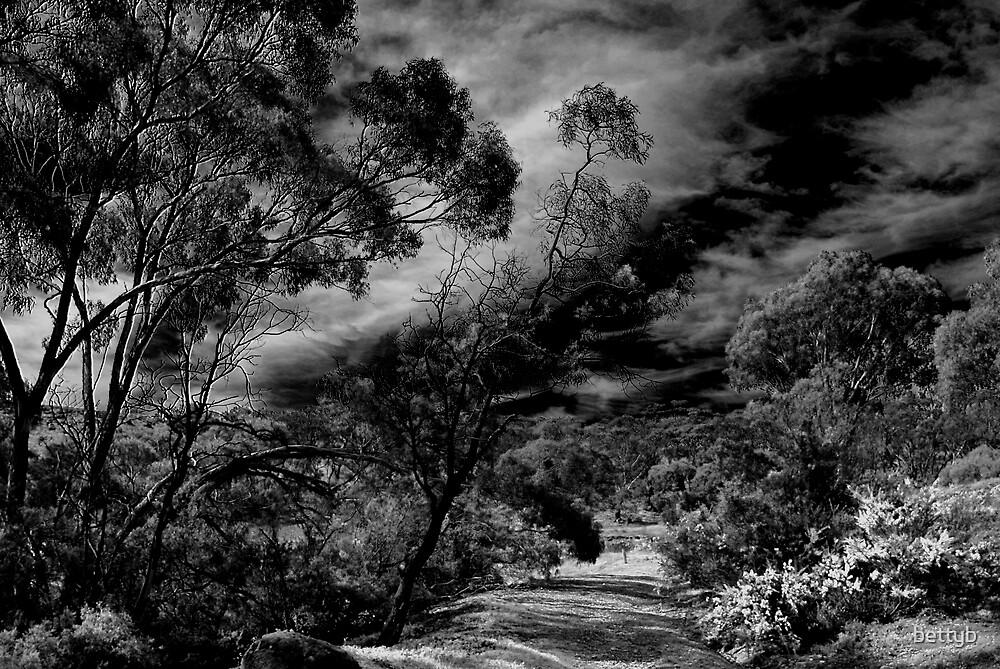 Djerriwarrah Creek by bettyb