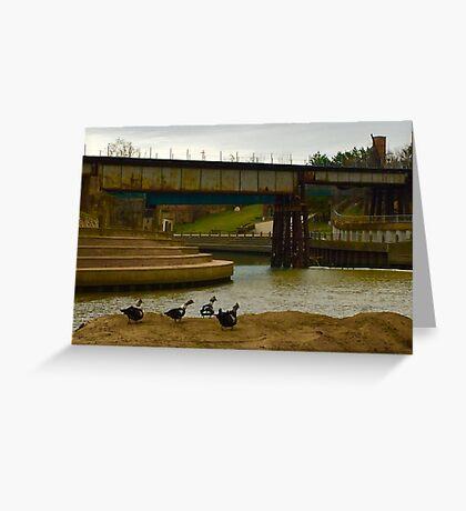 All Duckies in a Row a Buffalo Bayou Greeting Card