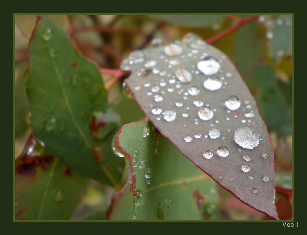 Dew Drops by Vee T