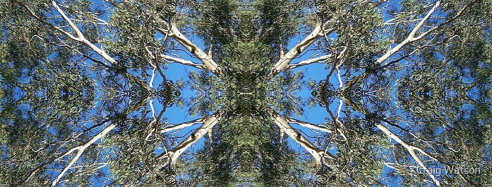 Gum Tree Kaleidoscope by Craig Watson