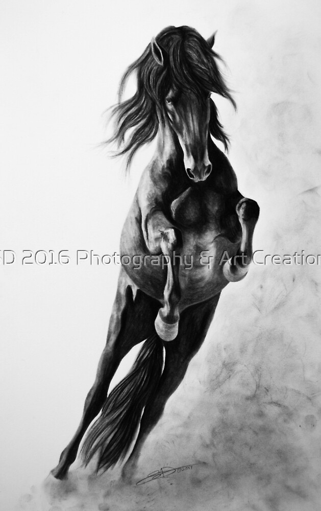 """""""On Wings of Faith"""" - Andalusian stallion by SD 2016 Photography & Art Creations"""
