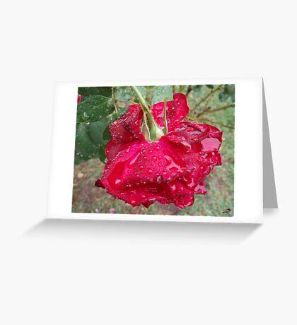 Rose Puddles Greeting Card