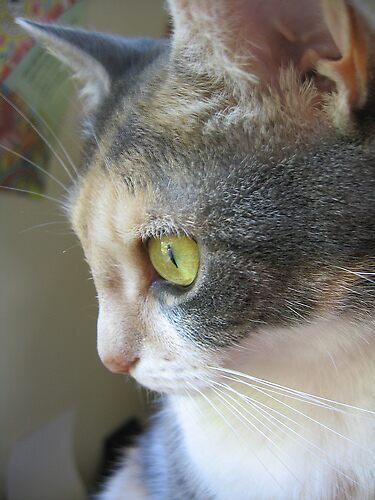 MY CAT by LazyBird4eva