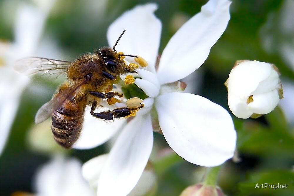 Pollen Aware 01 by ArtProphet