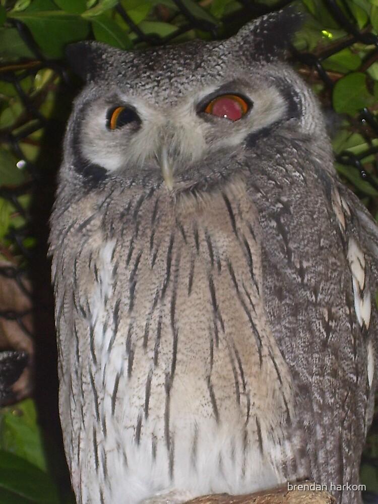 Owl by brendan harkom
