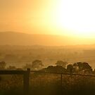Good morning sunshine by TheaShutterbug