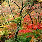 Flavours of Autumn by Steven Zan