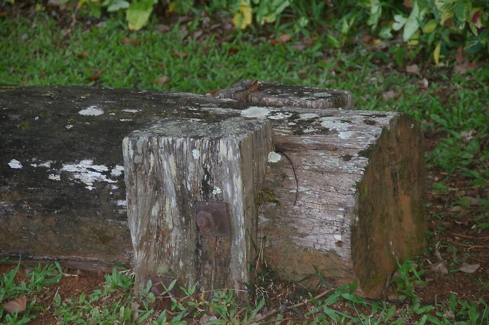 logging by Jill Vidgen