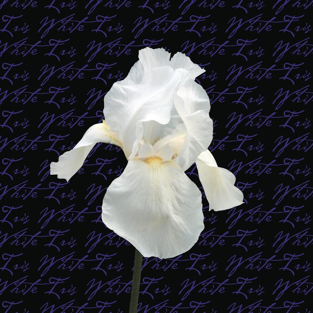 White Iris by Lisa Pitman