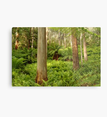 Ferns,Haunted Stream High Country Metal Print