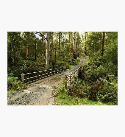 Bridge Track, Otway Ranges Photographic Print