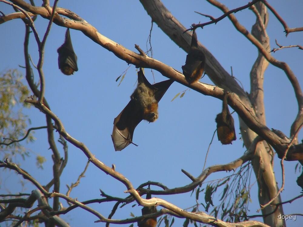 FRUIT BATS by dopey