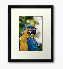 Colorful macaw Framed Print