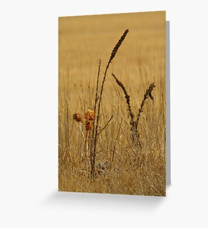 Thistle,Geelong District Greeting Card