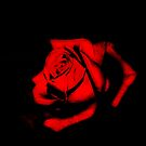Red Rose by Lissy