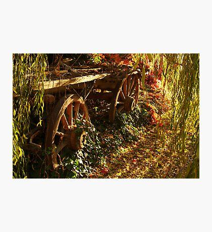 Cart  Photographic Print