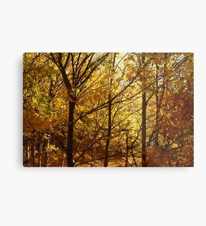 Autumn at Clunes Metal Print