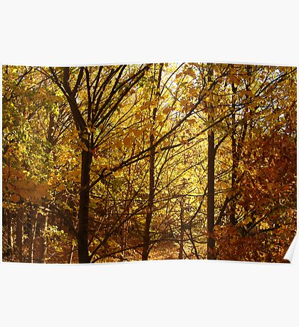 Autumn at Clunes Poster