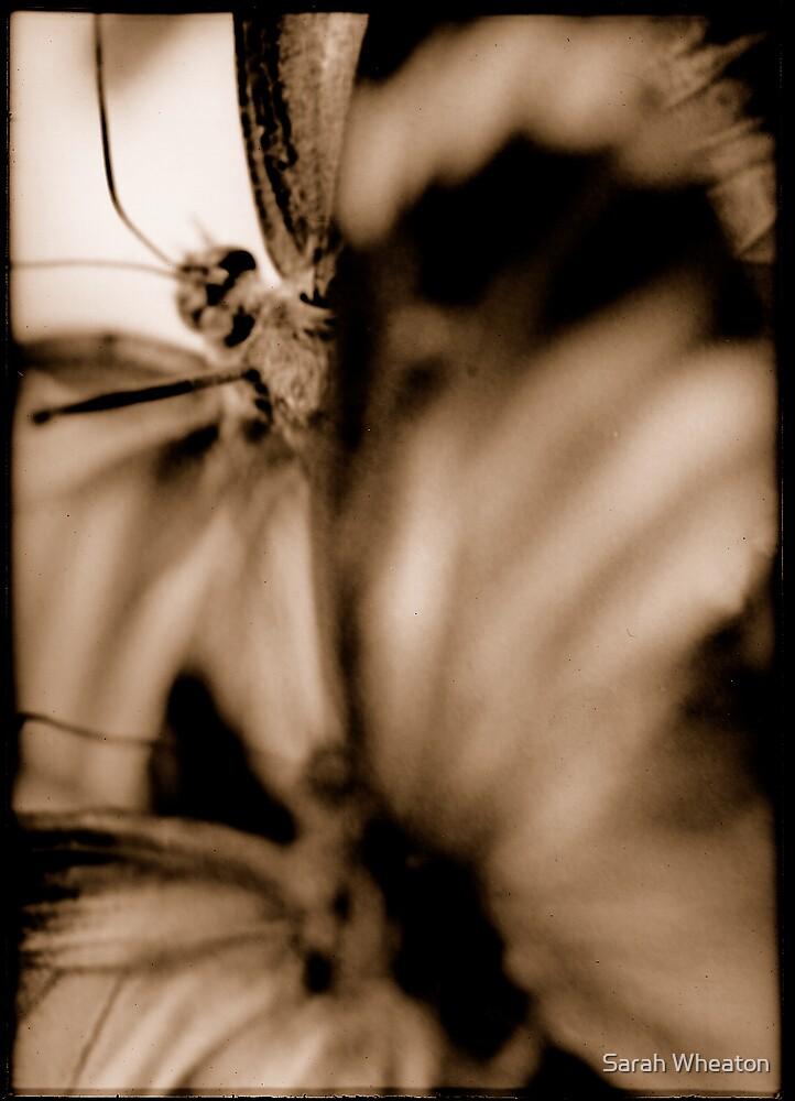 butterflies by Sarah Wheaton