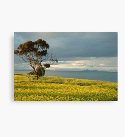Golden Fields, Bellarine Peninsula Canvas Print