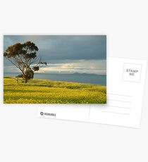 Golden Fields, Bellarine Peninsula Postcards