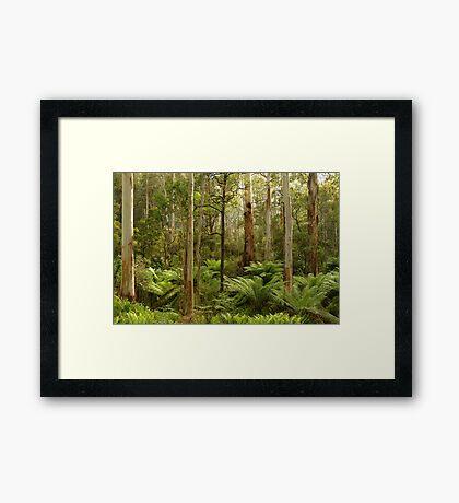 Morning Light Dawson City Haunted Stream High Country Framed Print