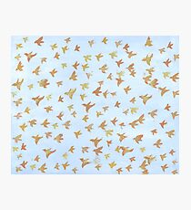 100 Birds Photographic Print