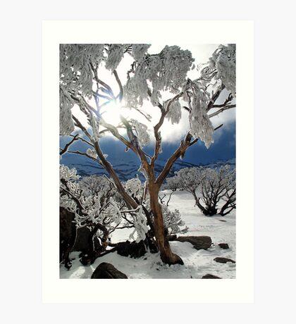 Snowgums 2 Art Print