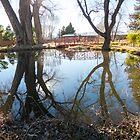 Bridge Reflection by Judi FitzPatrick
