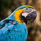 blue and yellow macaw by Martin Pot