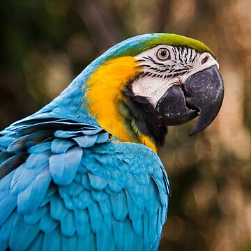 blue and yellow macaw by martybugs