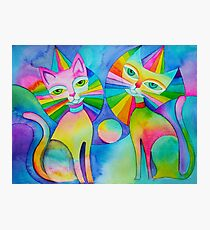 Rainbow Pussies Photographic Print
