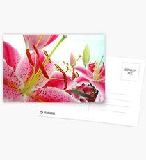 Pink Profusion Postcards