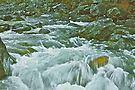Amid the Rapids by John Butler