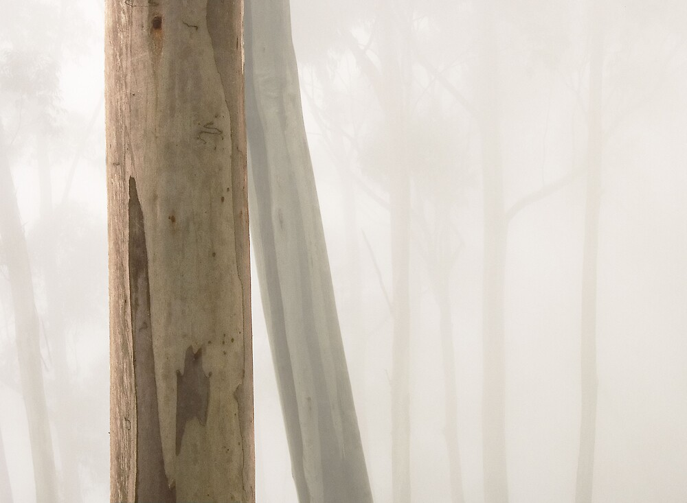 Trees in Mist by Michael Dingley