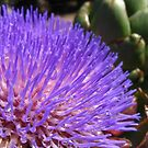 Artichoke in Bloom by everpresent