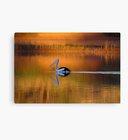 Pelican at Sunset Diamantina River Canvas Print