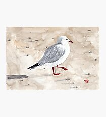 Stephen C Gull Photographic Print