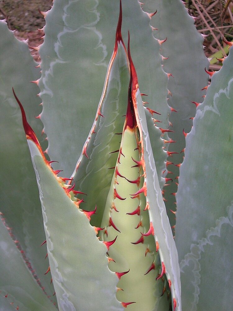 Succulent1 by Peter Neish