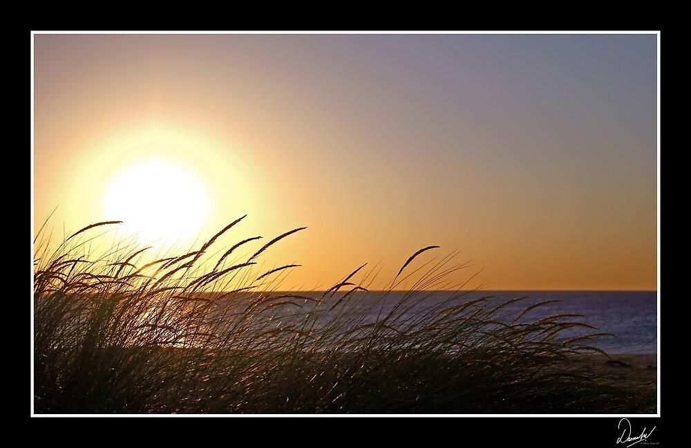 Windswept by Darren Kwok