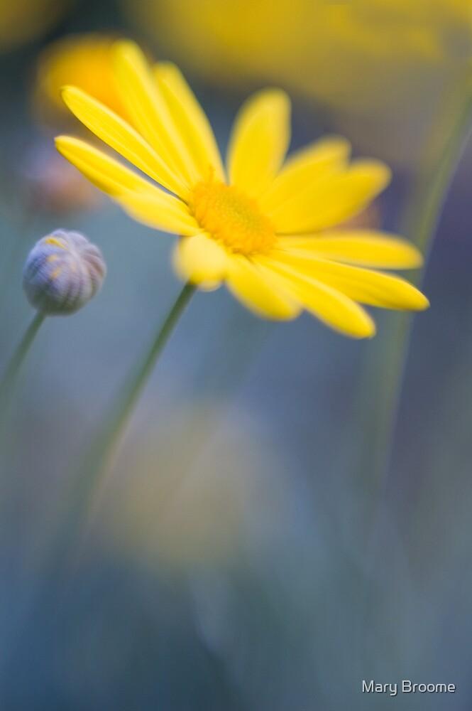 Daisy by Mary Broome