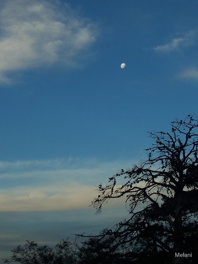 Full moon evening by Melani