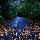 Autumn Colours  by shelleybabe2
