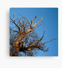 branching out... Canvas Print
