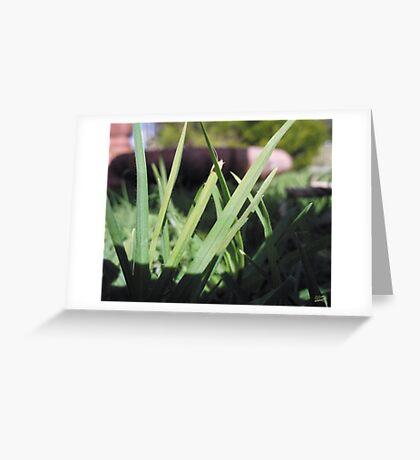 Suburban Jungle Greeting Card
