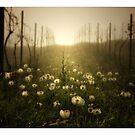 The Vineyard by Aaron .