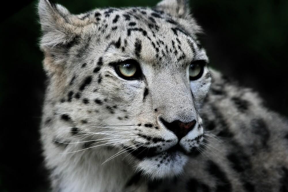 The Snow Leopard by Natalie Manuel