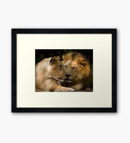 Feline Romance Framed Print