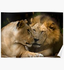 Feline Romance Poster