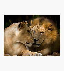 Feline Romance Photographic Print
